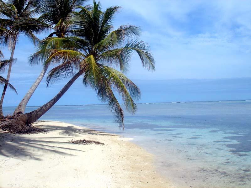 Vacances j oublie tout - Palmier cocotier ...